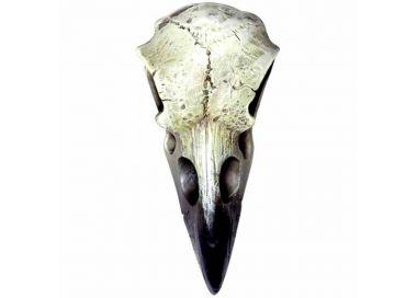 Crâne de Corbeau Reliquaire en Résine