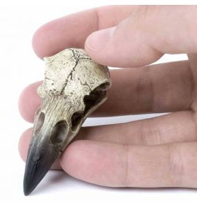 Resine Raven Skull 'Corvus Alchemica'