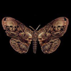 T-Shirt 'Sepulchre Moth' Noir